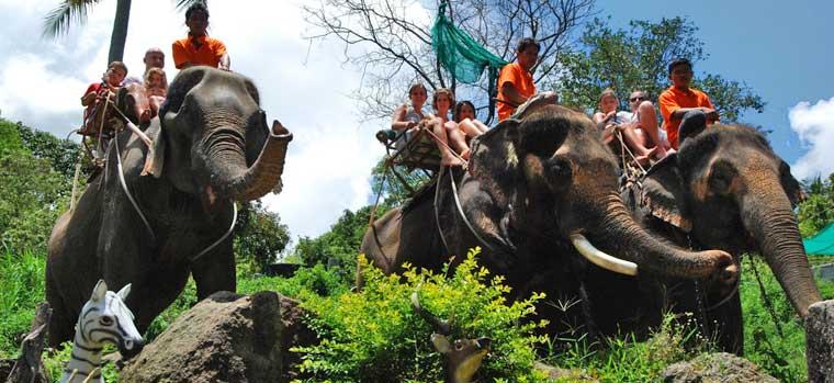 elephant-trekking-phangan