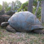 mauritius-island-1400660-640x480
