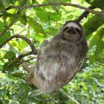 sloth-panama-1341748-639x426