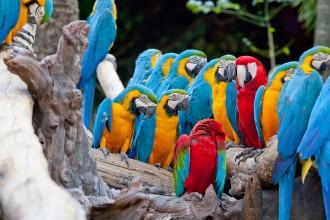 Kosta Rica (2)