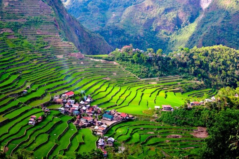 pirinc tarlalari